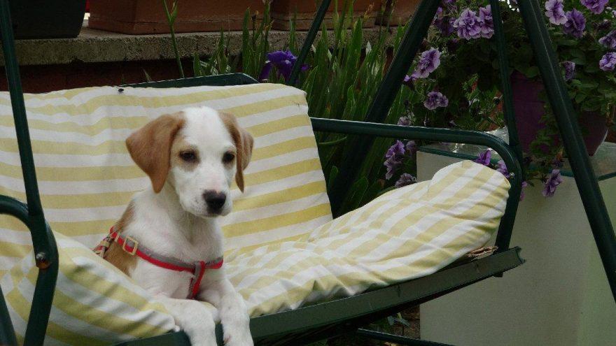 Sahibinin kötü muamelede bulunduğu köpek, yeni yuvasında