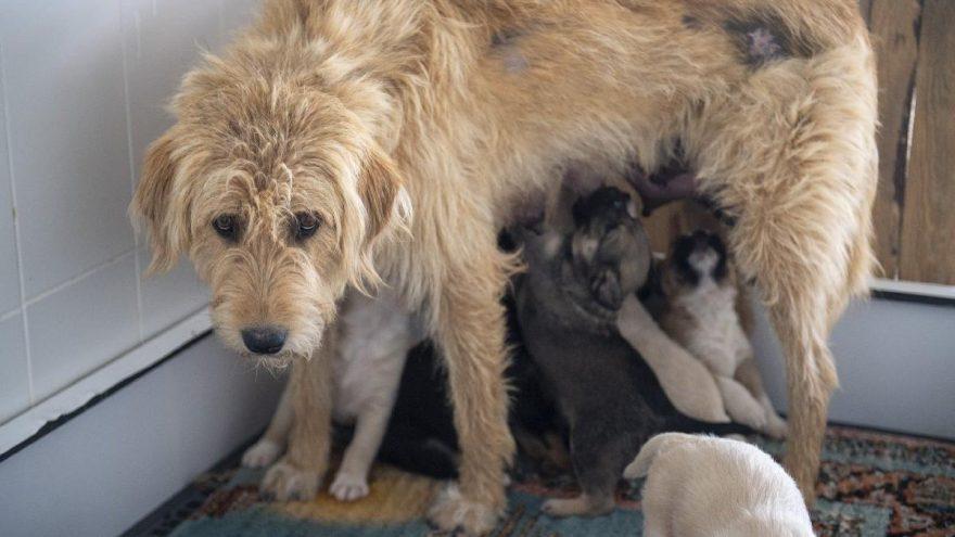 Ağaç kökünden anne köpek ve 7 yavru çıkarıldı