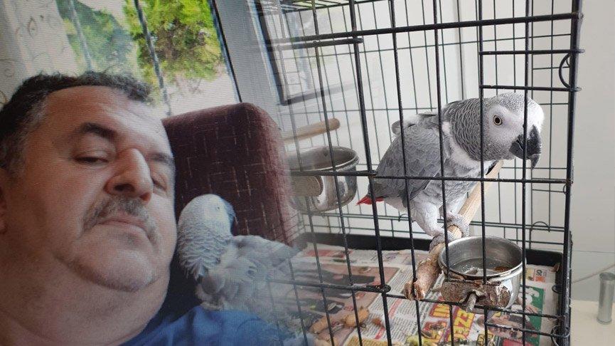 Şehit oğlundan kalan papağan kayboldu! Bulana ödül verecek