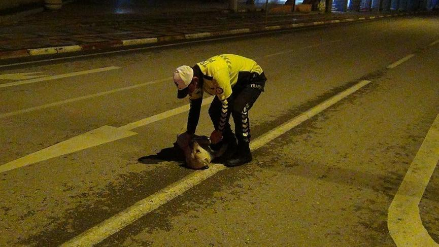 Polis memuruyla köpeğin gülümseten görüntüleri