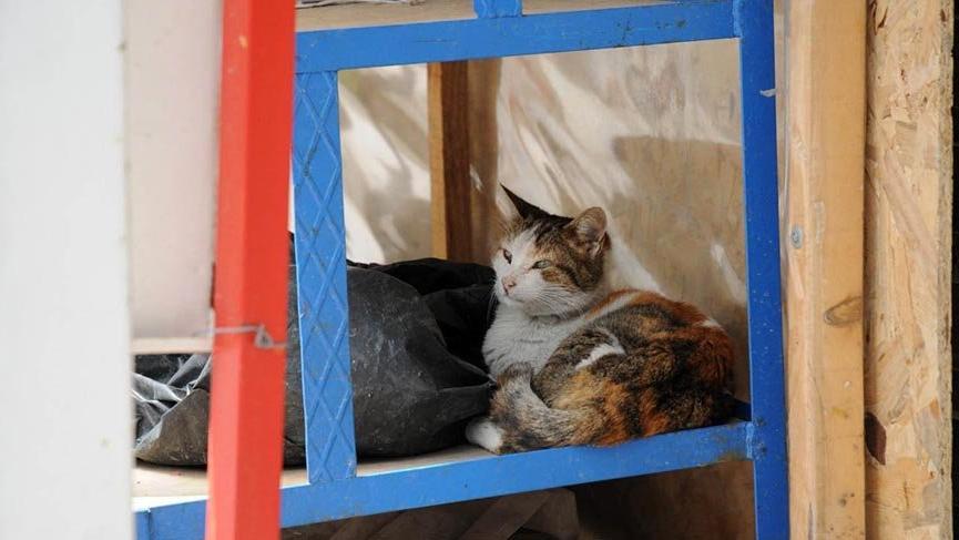 Tezgahlar kedilere emanet