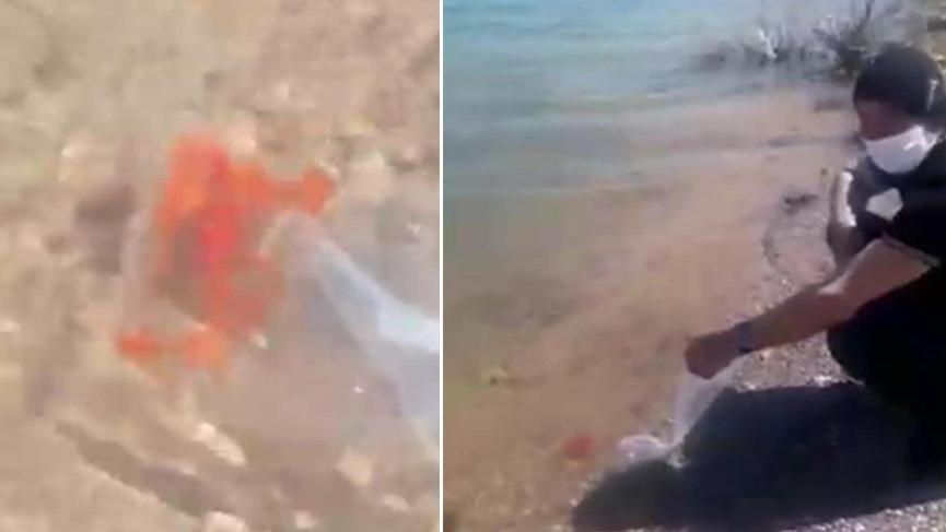 ABD'linin baraj gölüne bıraktığı balıklar bulunamadı!