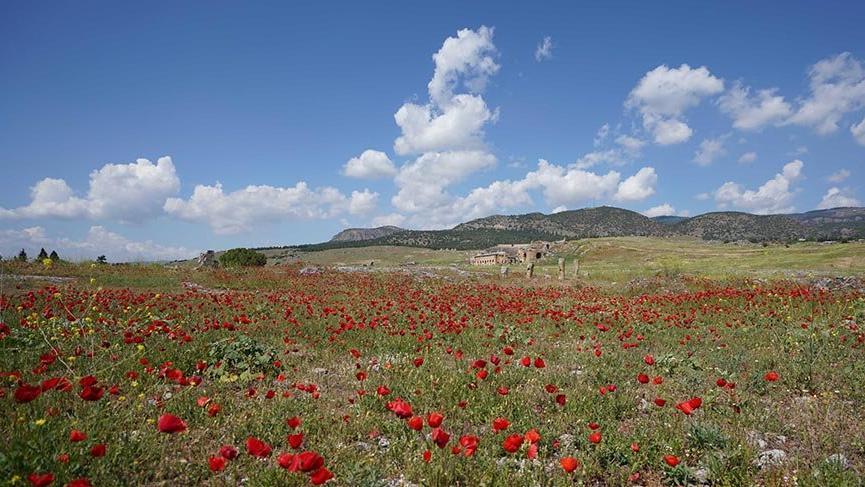 Hierapolis Antik Kenti'nde çiçeklerle görsel şölen