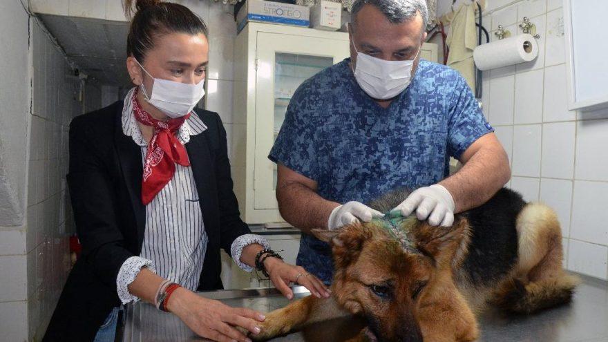 Kesici aletle işkence yapılan köpeği sahiplendi: Ailesi biz olacağız