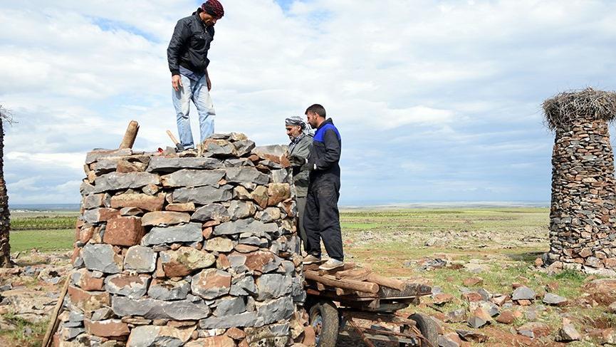 Leyleklerin sayısı artınca mahalleli yeni kuleler yapmaya başladı