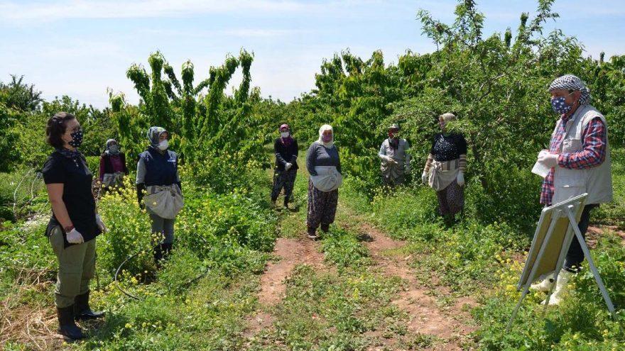 Emekli öğretmenden tarım işçilerine hasat öncesi virüs dersi