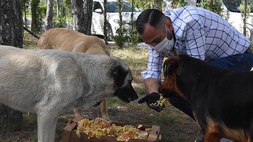 Hayvanseverler, aç kalan sokak hayvanlarını besledi