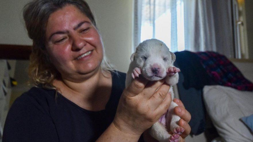 Anneleri öldürülen köpekleri, biberonla besleyip hayata bağladı
