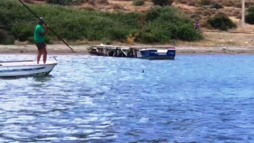Bodrum'da dehşet! Köpek balığını mızrakla öldürdüler