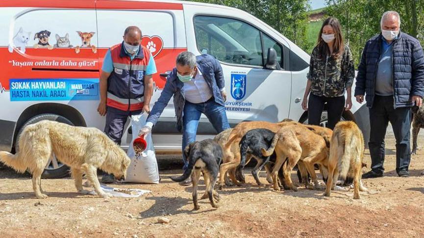 Ankara Büyükşehir Belediyesi'nden sokak hayvanlarına 461 ton mama ...