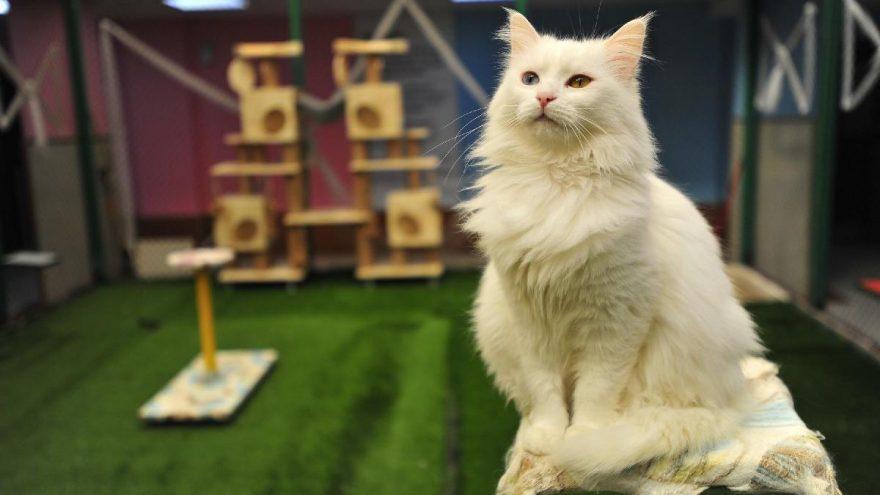 Van Kedisi Villası'nda yeni kurallarla açılış hazırlığı