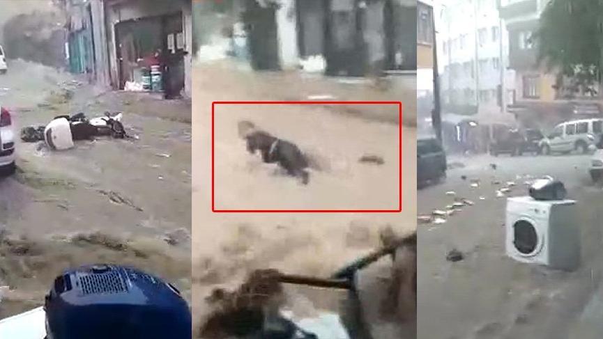 Ölüm kalım savaşı... Bursa'da sel suları önüne ne kattıysa sürükledi