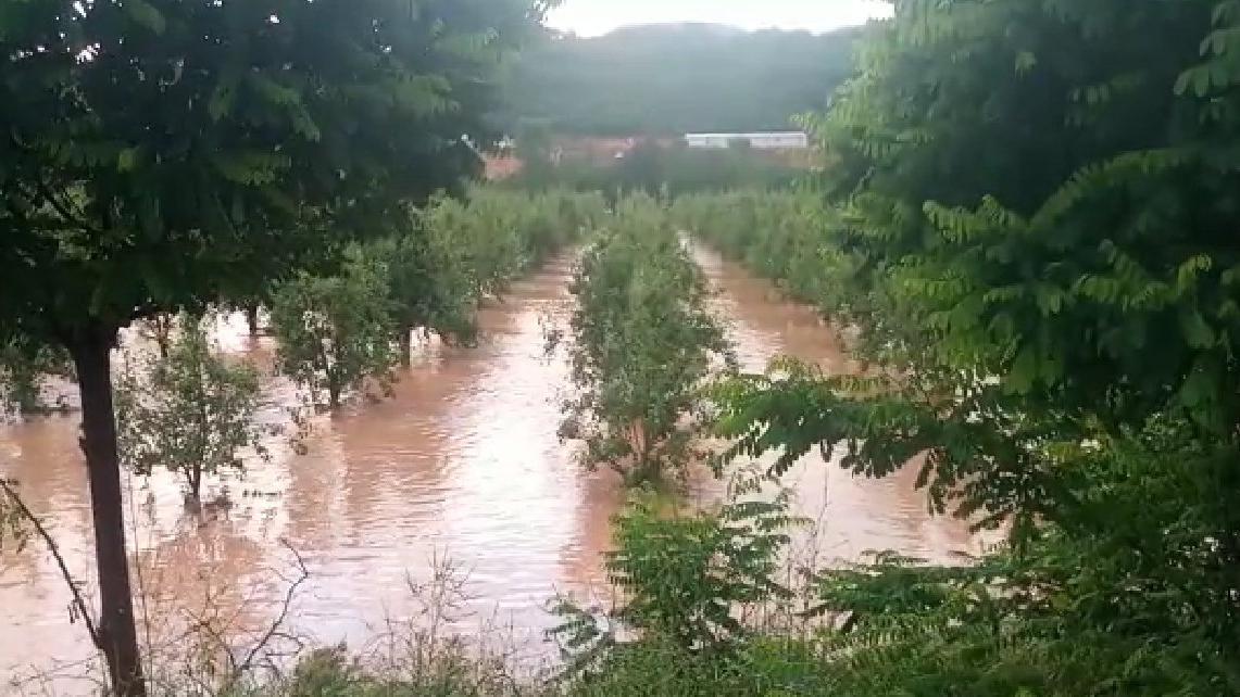 Bursa'da sağanak yağış ve dolu tarımı olumsuz etkiledi