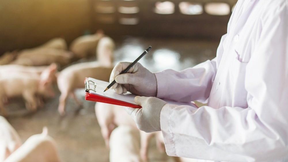 G4 EA H1N1 nedir? Çin'de keşfedilen yeni domuz gribi türü insana bulaşır mı?