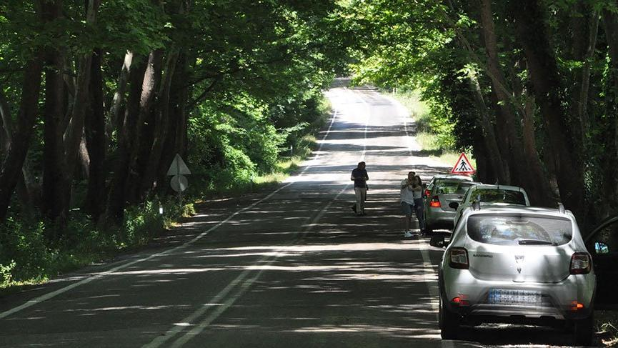 Ağaçların tünel oluşturduğu yol görsel şölen sunuyor
