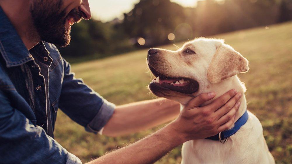 Köpeklerde insan yılı hesabı değişti! Çok daha çabuk gelişiyorlarmış