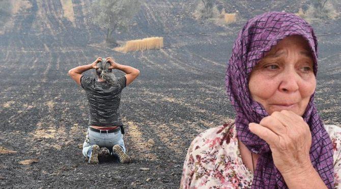 Gelibolu'da tarlaları yanan köylüler büyük üzüntü yaşadı: Bunun gibisini görmedik