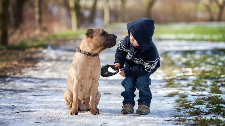 Sağlıklı çocuklar hayvanlarla iç içe yetişir