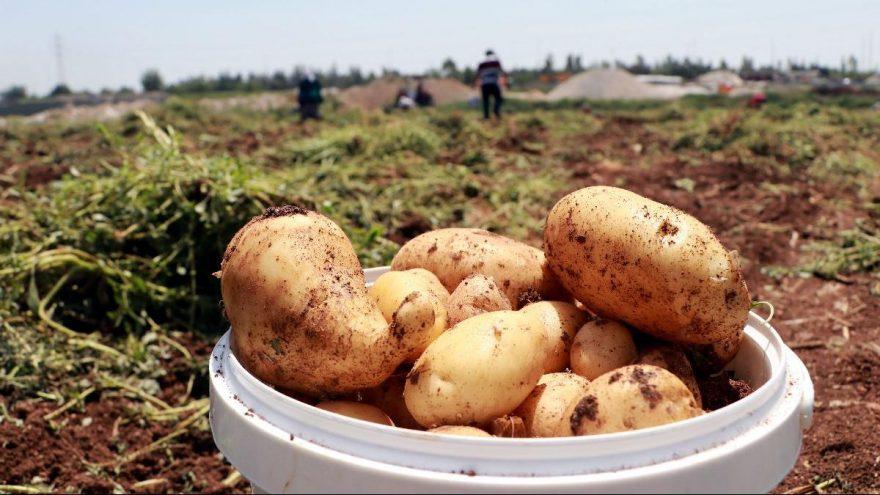 TZOB Genel Başkanı Bayraktar: Soğan, patates ve limon üreticisi sıkıntıda