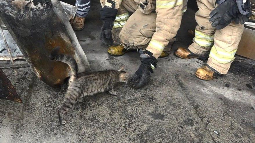 Yangında mahsur kalan yavru kedileri itfaiye kurtardı