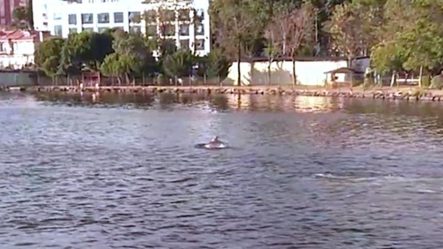 'Kirlendi' denilen Haliç'te yunuslar yüzdü!