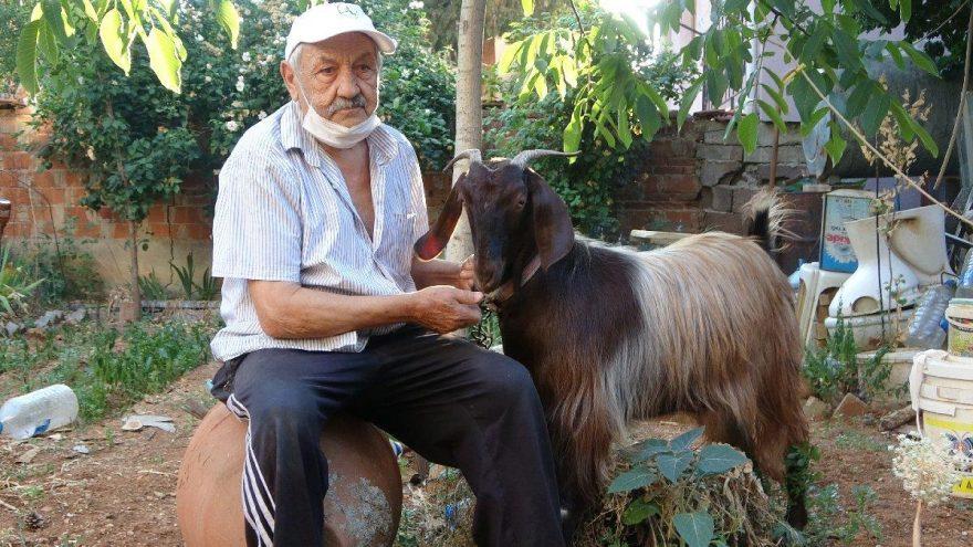 Yalnızlıktan sıkılınca sahiplendiği keçiyle dost oldu