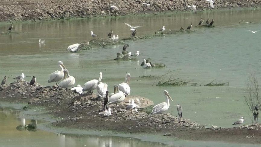 Kars Baraj Gölü su kuşlarını ağırlıyor