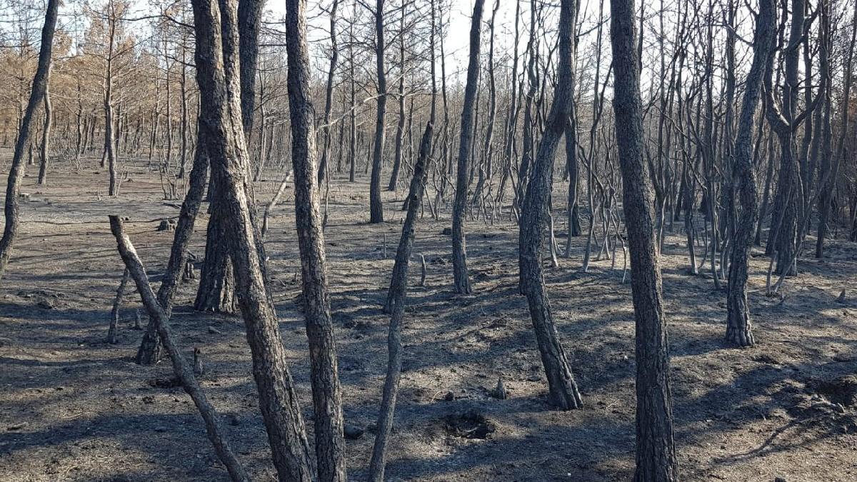 Gelibolu Yarımadası'ndaki yangınların tahribatı objektiflere böyle yansıdı