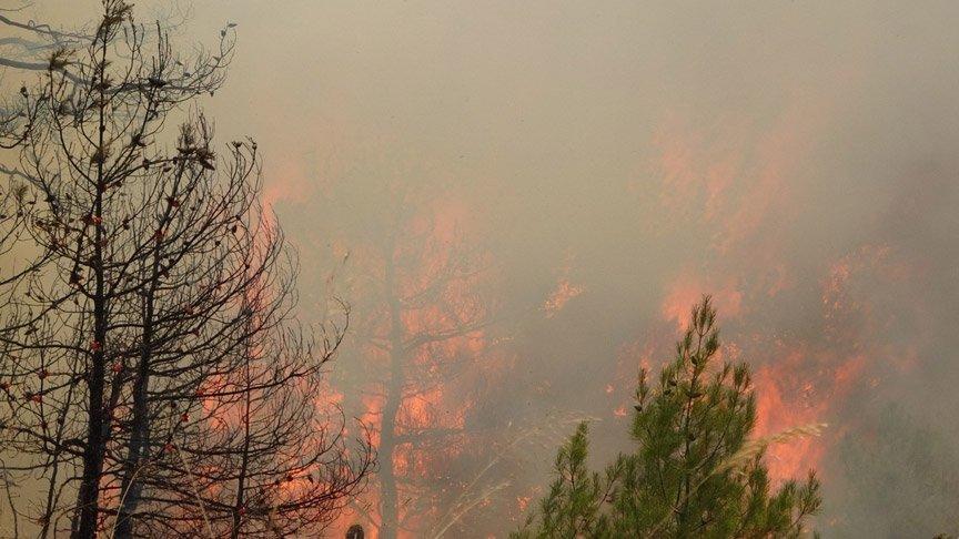 Bir günde 20 orman yangını! OGM'den dikkat çeken uyarı...