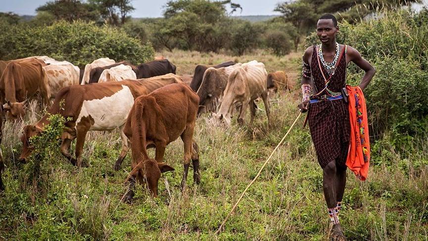 Afrika'nın en büyük doğal alanlarından biri olan Amboseli Milli Parkı