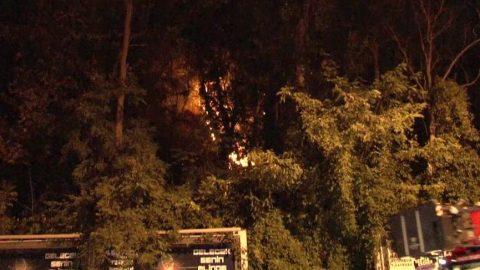 Emirgan Korusu'ndaki yangının sebebi belli oldu!