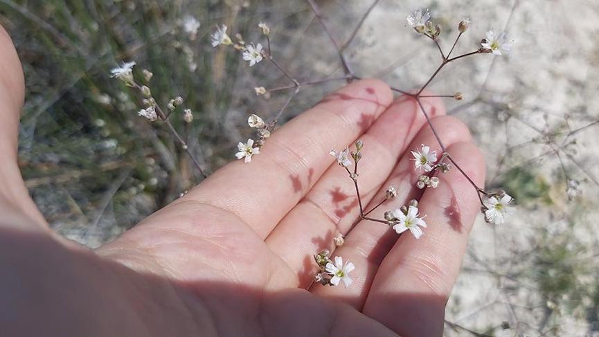 Tuz Gölü Havzası'nda 72 endemik bitki türü tespit edildi