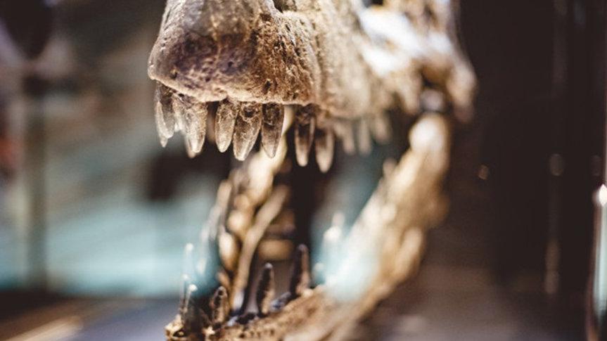 İskeletinin tamamı bulunan dinozor üzerindeki çalışmalar 150 yılın ardından tamamlandı