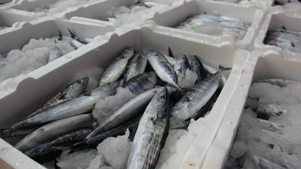 Rize'de denize açılan balıkçılar kasalar dolusu palamutla döndü
