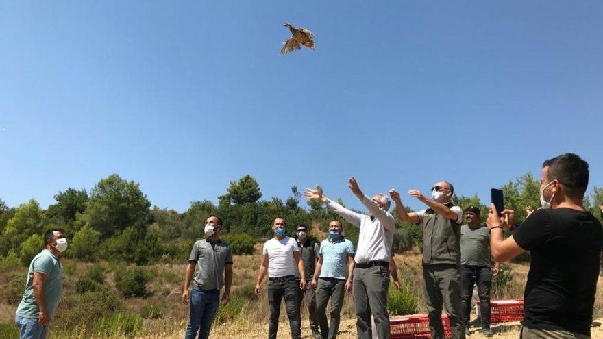 Manavgat'ta 100 adet kınalı keklik doğaya bırakıldı