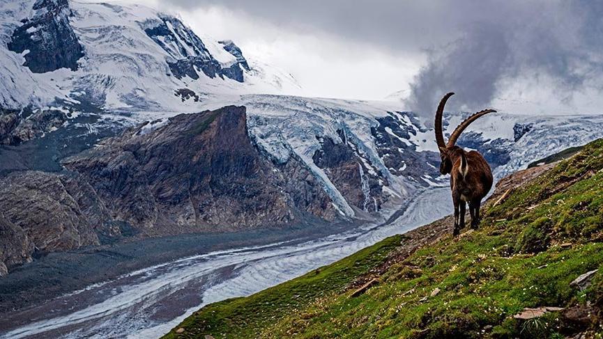 Avusturya ve Doğu Alpler'in en uzun buzulu Pasterze