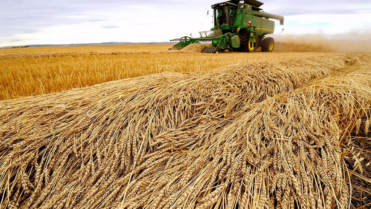 İktidarın buğday politikası iflas etti