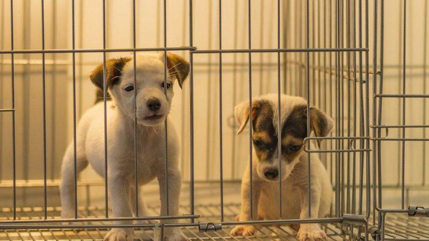 Beşiktaş Belediyesi, evcil hayvan ticaretini yasaklıyor