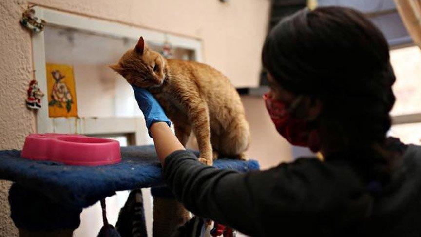 Evcil hayvanlardan corona virüsü bulaşır mı?