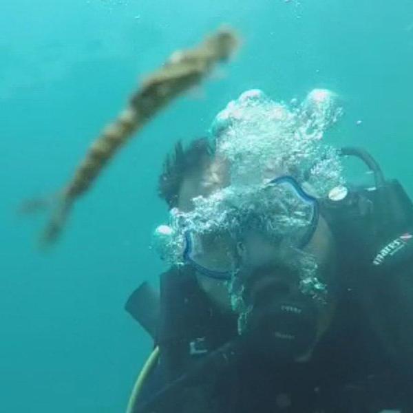 Van Gölü'nde yeni canlı türüne rastlandı