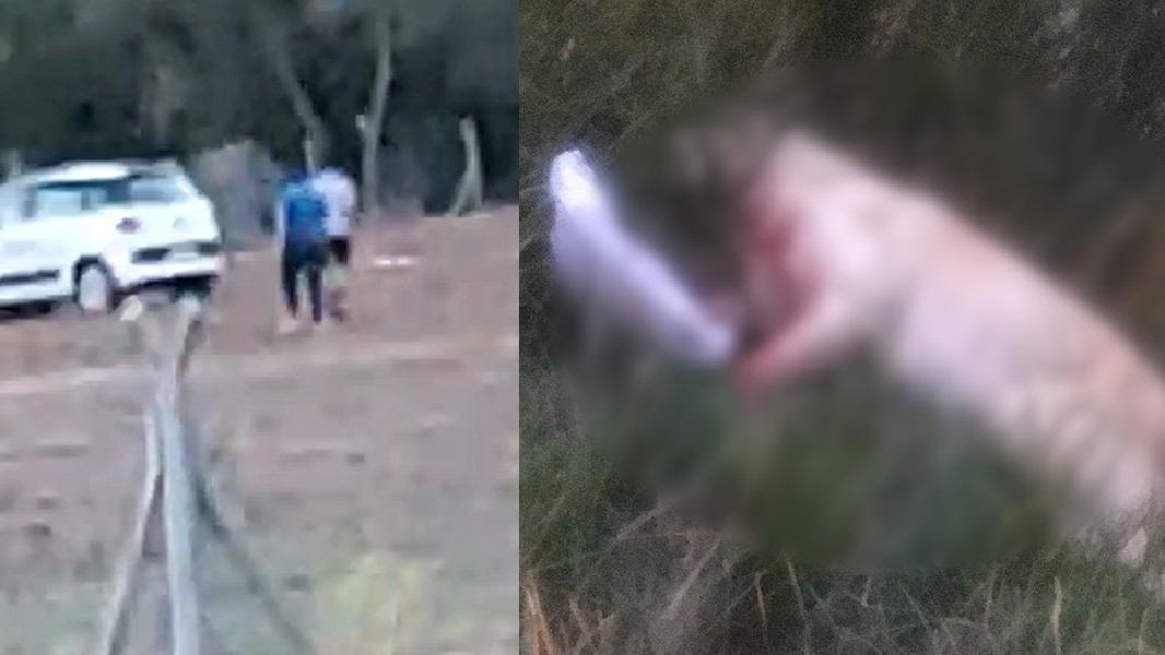 Hayvanları Koruma Günü'nde köpeği tüfekle vurdu