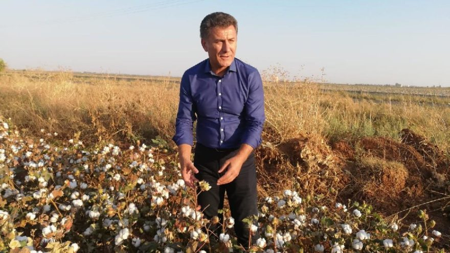 CHP'li Sarıbal: Pamuğa 3 yıldır 80 kuruş prim ödeniyor