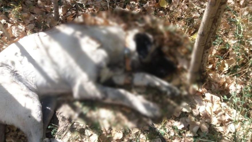 Şüpheli hayvan ölümlerinin nedeni salgın çıktı