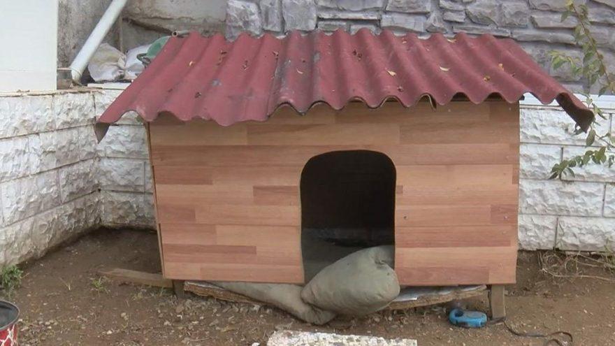 Sarıyer'de iğrenç olay: Sahiplendikleri 13 köpeğe işkence yaptılar