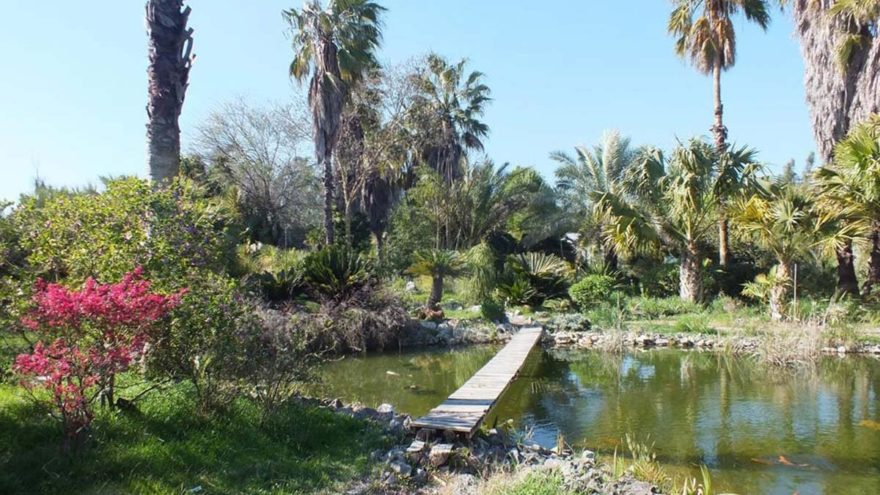 Palmiye müzesi