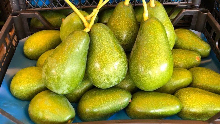 ÖZEL   Marketler büyük, avokado küçük! 200 gramın altında almayın…