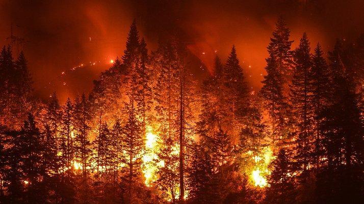 Kıbrıs'ın bir buçuk katı orman yandı