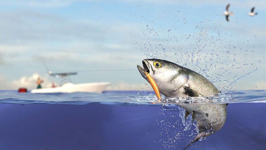 Lüfer: Bir balıktan çok daha fazlası... Ve onu kaybediyoruz
