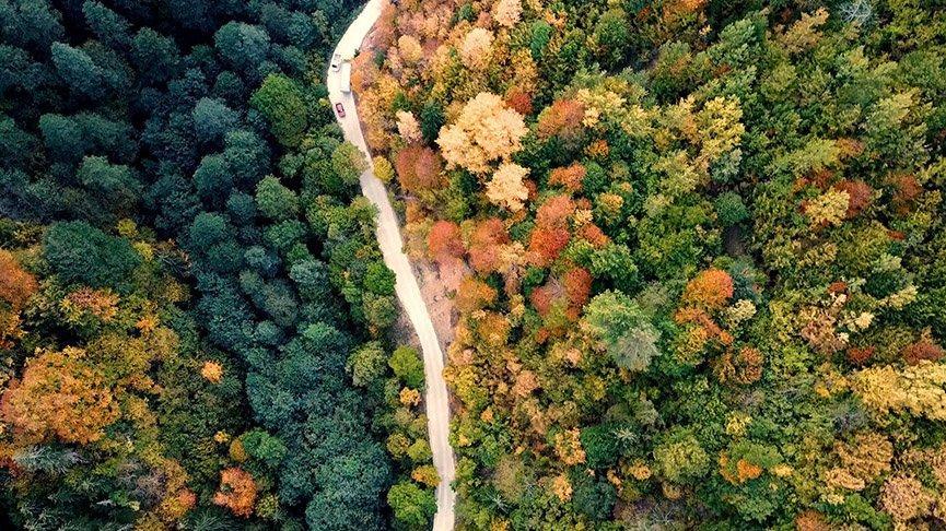 Örümcek Ormanları sonbaharla binbir renge büründü