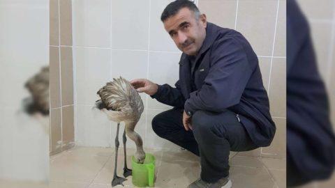 Hakkari'de bulunan yaralı flamingo tedavi altına alındı
